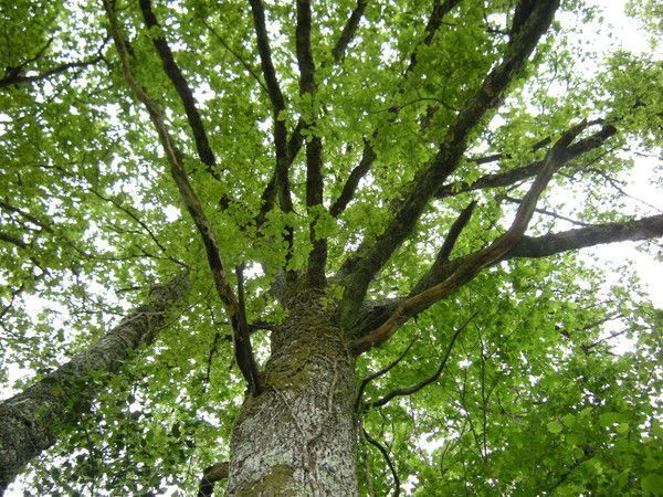 tuer racines arbre