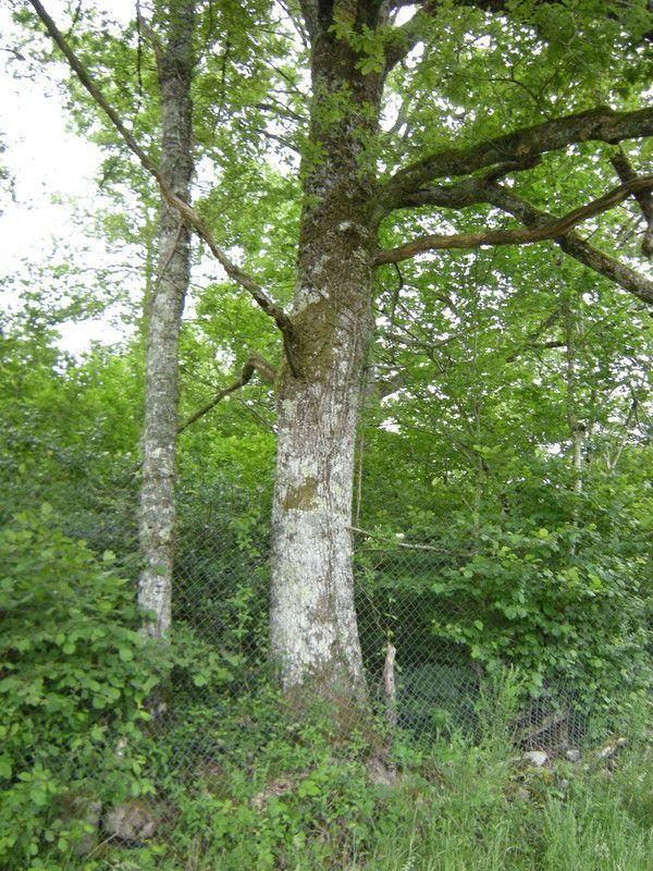 23.3 - Quel est l'âge de la branche ? - a warlike tree - p