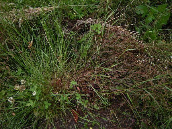 19.2.b - cohabiter pour un temps - quackgrass & clover - p